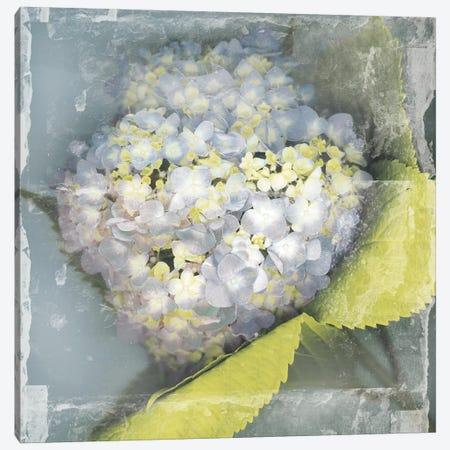 Antique Bloom Canvas Print #ECK104} by Erin Clark Art Print