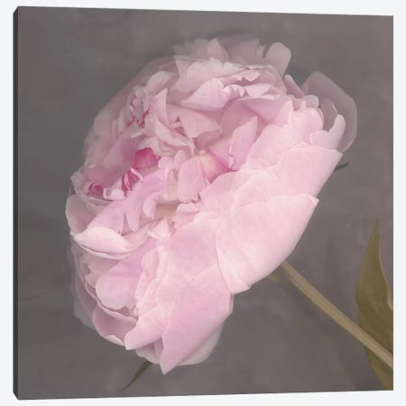 Fleur Canvas Print #ECK228} by Erin Clark Canvas Art Print
