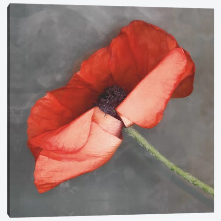 Rouge Canvas Print #ECK378} by Erin Clark Canvas Art Print