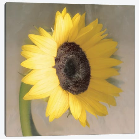 Sunflower Canvas Print #ECK414} by Erin Clark Canvas Art Print