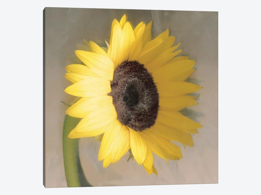 Sunflower by Erin Clark 1-piece Art Print
