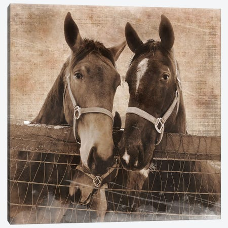 Trio Vintage Canvas Print #ECK429} by Erin Clark Canvas Print