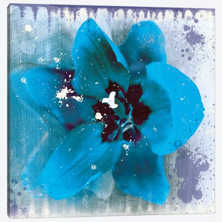 Tulip Fresco Blue Canvas Print #ECK434} by Erin Clark Canvas Art Print