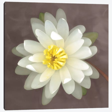 Water Lily Canvas Print #ECK448} by Erin Clark Canvas Print