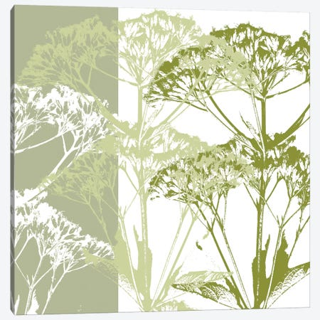 Delicate Greens Canvas Print #ECK51} by Erin Clark Canvas Print