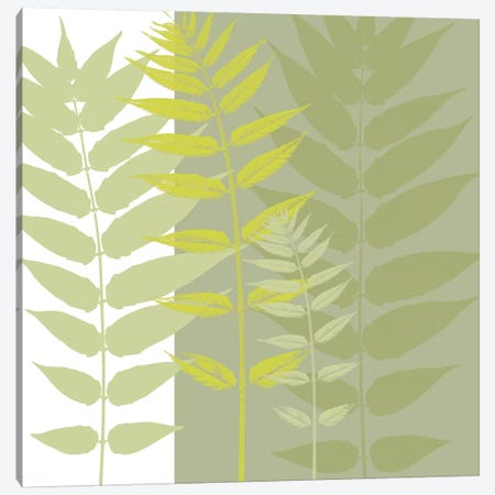 Field Greens Canvas Print #ECK59} by Erin Clark Canvas Art Print