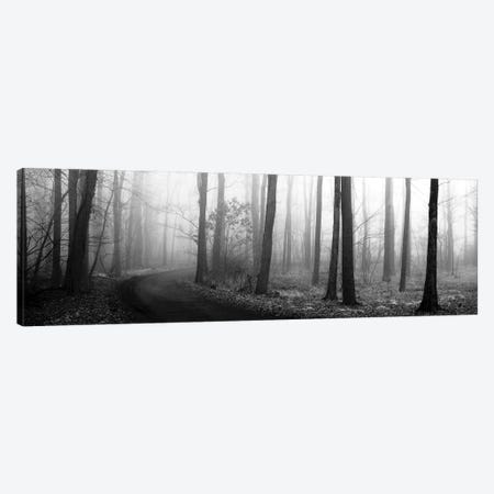 Forest Path Canvas Print #ECK60} by Erin Clark Canvas Wall Art
