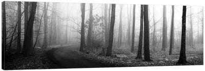 Forest Path Canvas Art Print