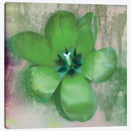Green Tulip Fresco Canvas Print #ECK62} by Erin Clark Canvas Artwork