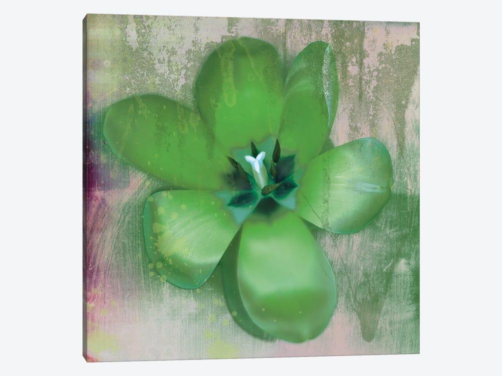 Green Tulip Fresco by Erin Clark 1-piece Canvas Art Print