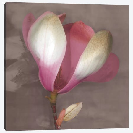 Magnolia Canvas Print #ECK72} by Erin Clark Canvas Art Print