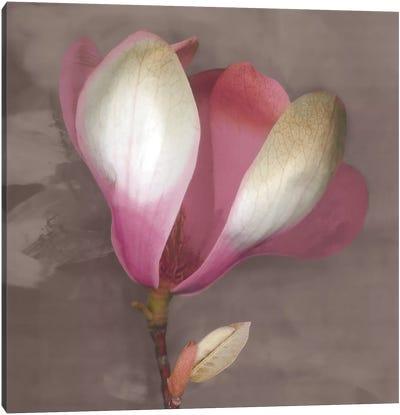 Magnolia Canvas Print #ECK72