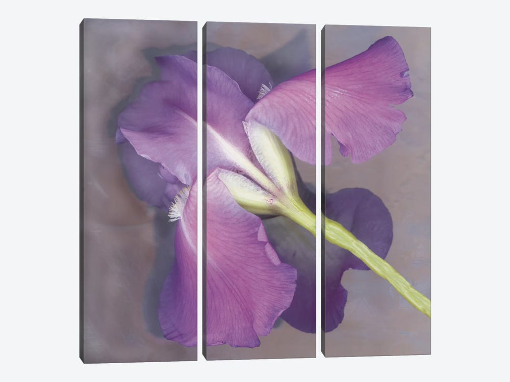 Parfum by Erin Clark 3-piece Canvas Artwork