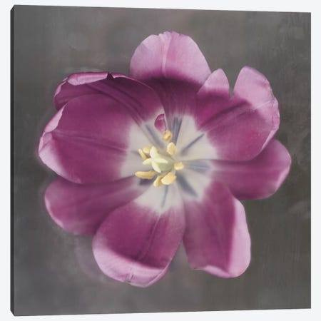 Purple Tulip Canvas Print #ECK80} by Erin Clark Canvas Wall Art