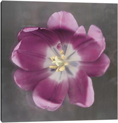 Purple Tulip Canvas Print #ECK80