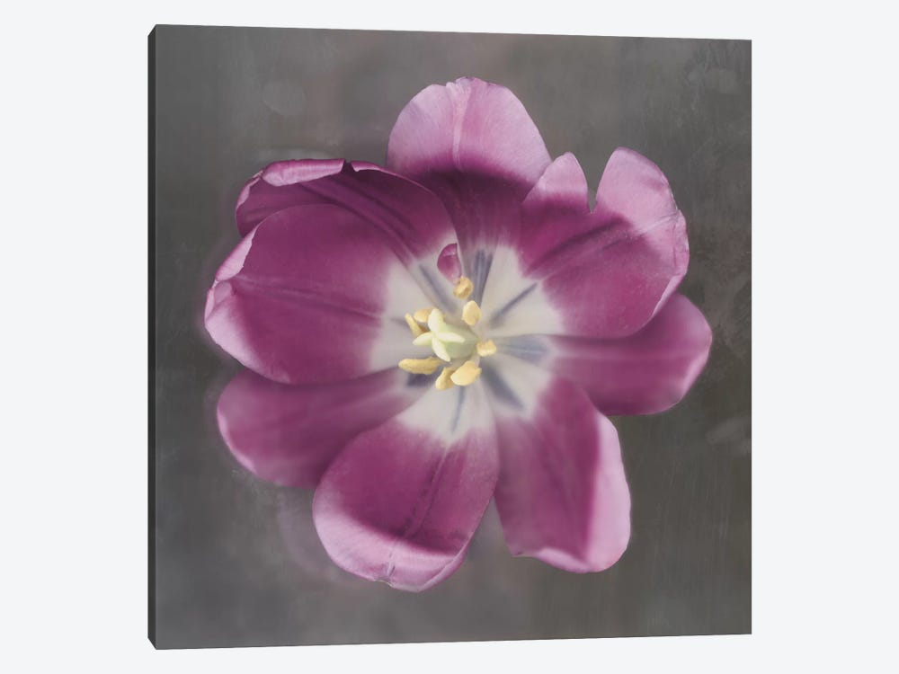 Purple Tulip by Erin Clark 1-piece Art Print