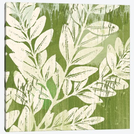 Sage Foliage Canvas Print #ECK82} by Erin Clark Canvas Wall Art