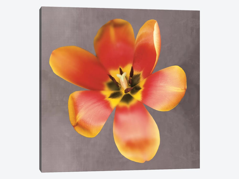 Sunshine Tulip by Erin Clark 1-piece Canvas Art