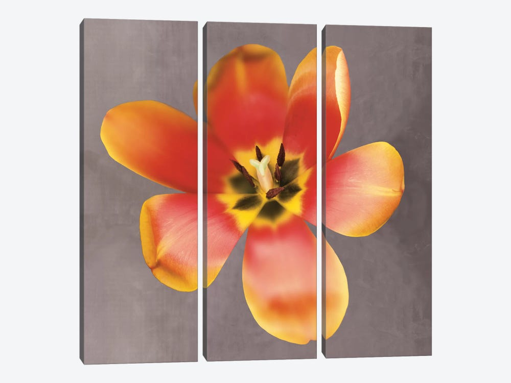 Sunshine Tulip by Erin Clark 3-piece Canvas Art