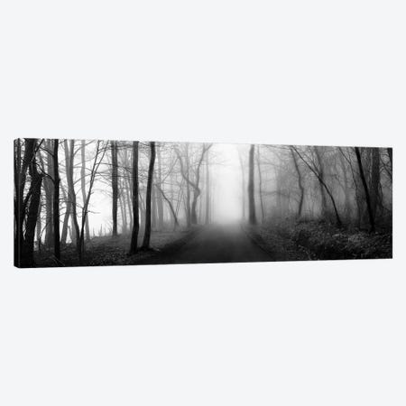 Woodland Walk Canvas Print #ECK92} by Erin Clark Art Print