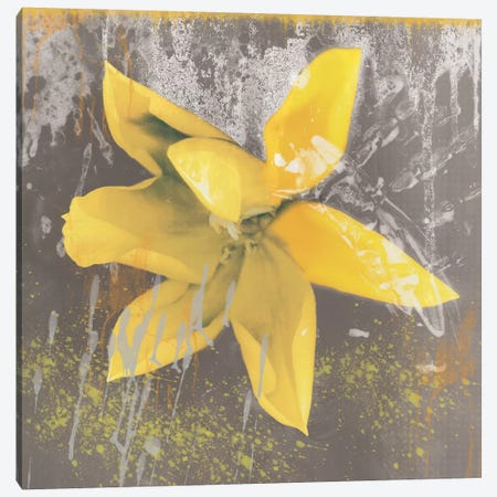 Yellow Tulip Fresco Canvas Print #ECK96} by Erin Clark Canvas Artwork