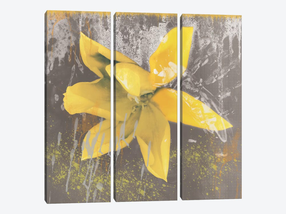Yellow Tulip Fresco by Erin Clark 3-piece Canvas Artwork