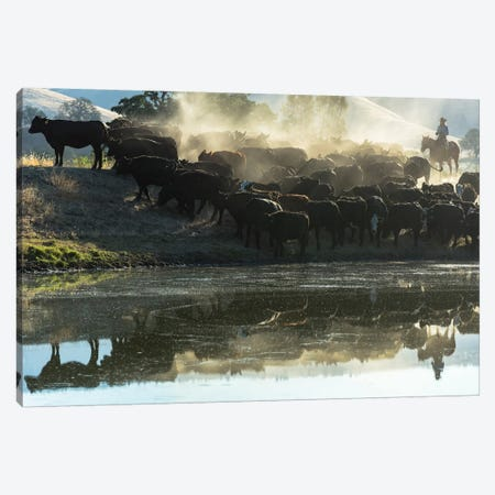 USA, California, Parkfield, V6 Ranch cowgirl with cows, reflected in pond  Canvas Print #ECL2} by Ellen Clark Canvas Wall Art