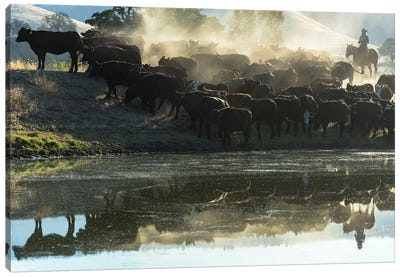 USA, California, Parkfield, V6 Ranch cowgirl with cows, reflected in pond  Canvas Art Print