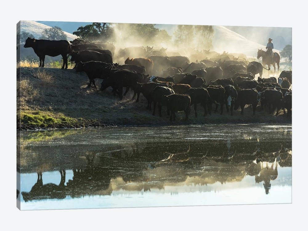USA, California, Parkfield, V6 Ranch cowgirl with cows, reflected in pond  by Ellen Clark 1-piece Art Print