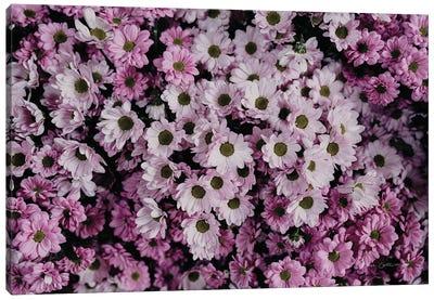 Pale Daisies Canvas Art Print