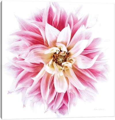 Pink Dahlia Canvas Art Print
