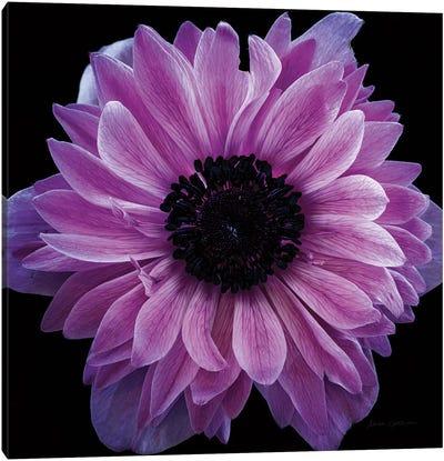 Purple Anemone Crop Canvas Art Print