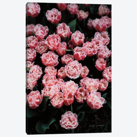 Fringed Tulips Canvas Print #ECT9} by Elise Catterall Canvas Art Print
