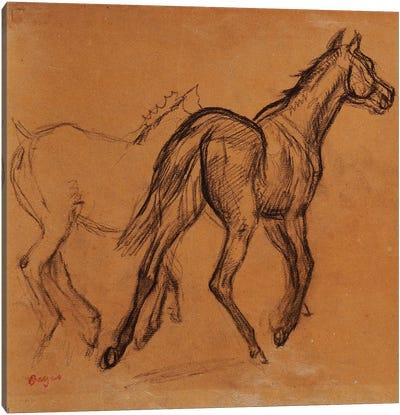 Horses, c.1882  Canvas Art Print