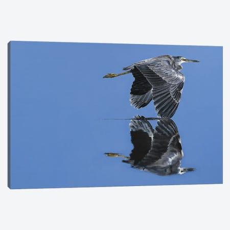 A Reflection Of Perfection Canvas Print #EDM1} by Sally Edmonds Canvas Art