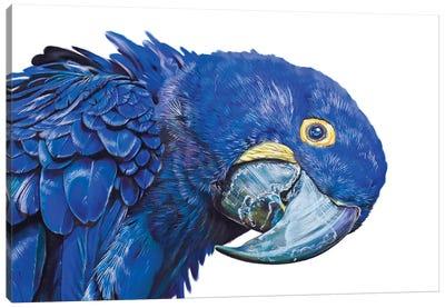 Hyacinth Macaw Canvas Art Print