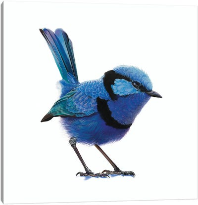 Berry Farm Blue Canvas Art Print