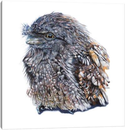Tawny Frogmouth Canvas Art Print