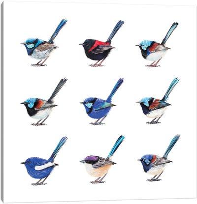 The Fairy Wrens Of Australia Canvas Art Print