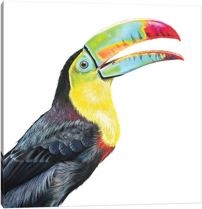 Toucan Play At That Game! Canvas Art Print