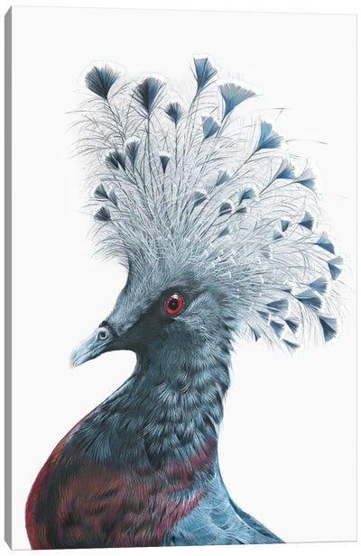 Victoria Crowned Pigeon Canvas Art Print
