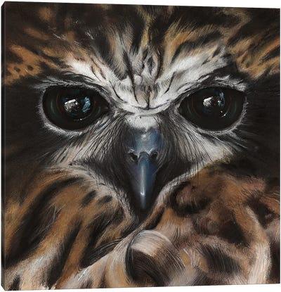 Boobook Owl Canvas Art Print