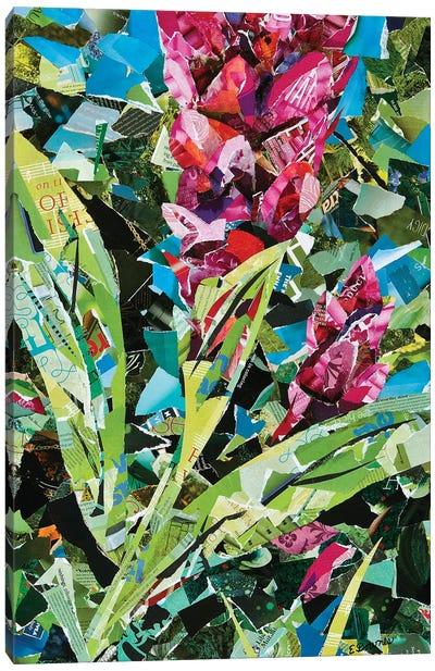 Pink Ginger Canvas Art Print