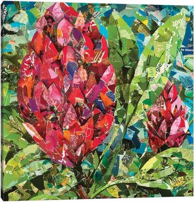 Protea Buds Canvas Art Print