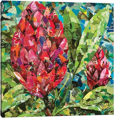 Protea Buds Canvas Art Print