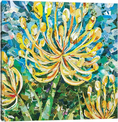 Yellow Pincushion Protea Canvas Art Print