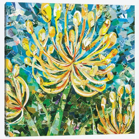 Yellow Pincushion Protea Canvas Print #EDO19} by Eileen Downes Canvas Artwork