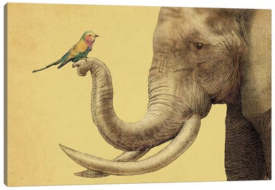 A New Friend Canvas Art Print