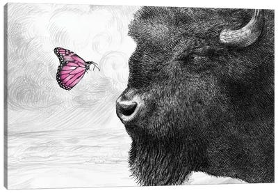 Bison and Butterfly Canvas Art Print
