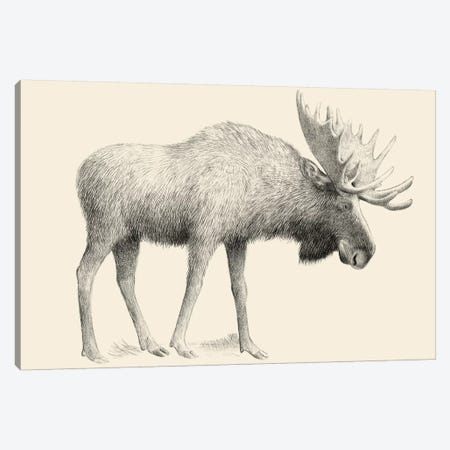 Moose Canvas Print #EFN61} by Eric Fan Canvas Art Print